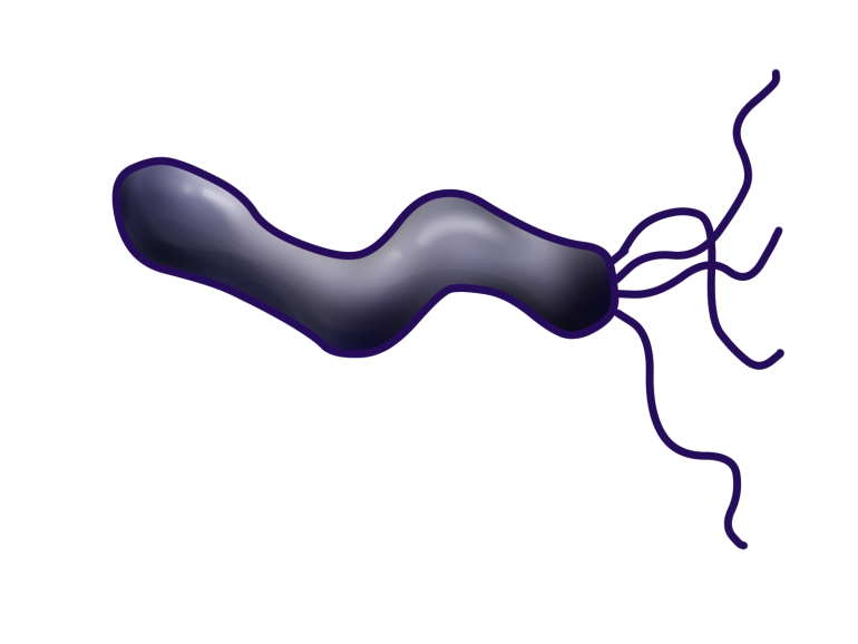 慢性胃炎の原因