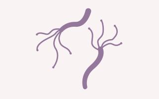 ピロリ菌除菌